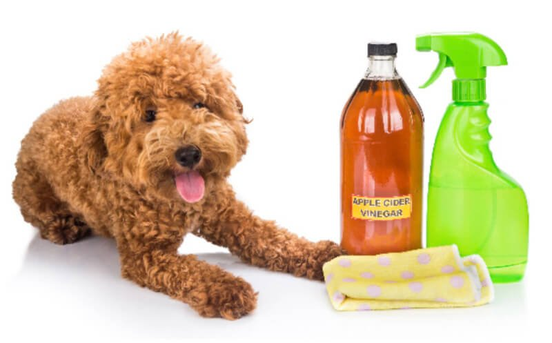 ACV is natural flea repellent for your pet
