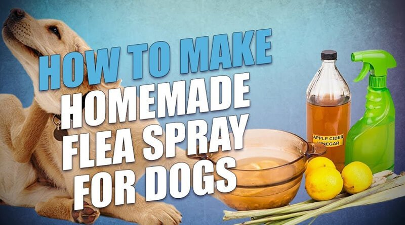 Can You Utilize Apple Cider Vinegar as a Homemade Flea Spray