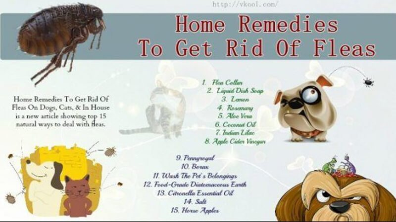 Other home remedies for fleas