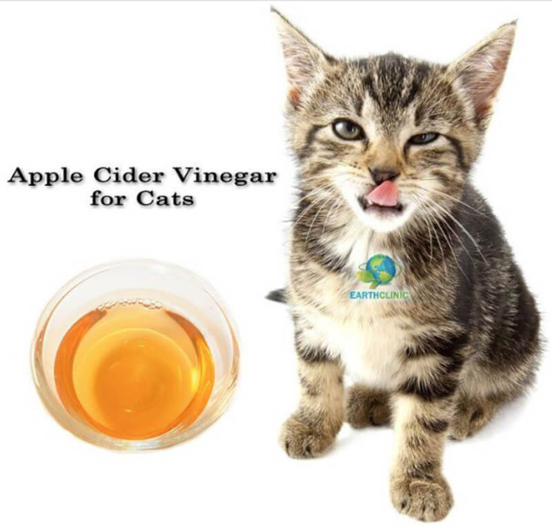 Use Apple Cider Vinegar For a Kitty Cold