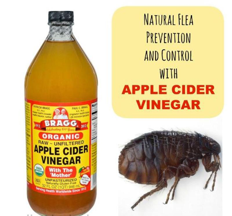 Apple cider vinegar for fleas