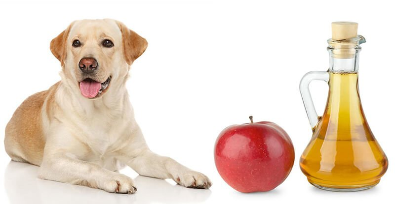 Dogs With Apple Cider Vinegar