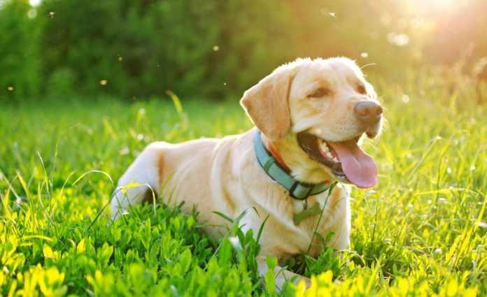 Heartworm Prevention For Dogs